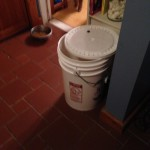Overflow of dry dog food. They get a full scoop (inside bucket) in the morning along with about 1/3 of a can of wet food, smooshed with warm water, like gravy. In the evening they can have another scoop without the wet food (unless you think they need it - sometimes they don't eat when I'm not there)